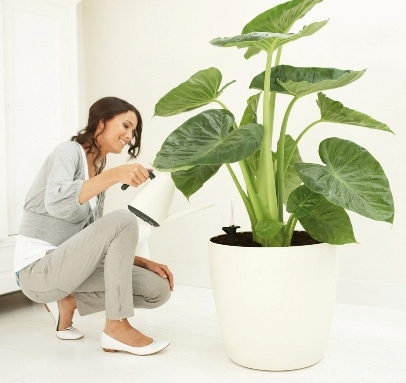 pielęgnacja zieleni