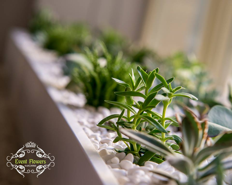 rosliny doniczkowe wrocław