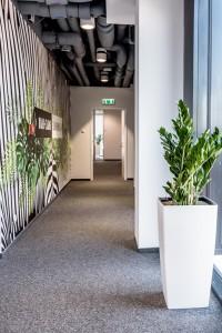 Rośliny Kwiaty doniczkowe do biura we Wrocławiu (4)