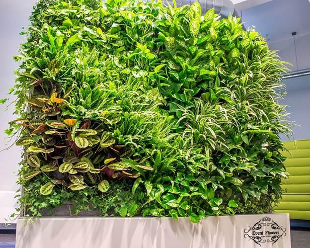 zielone-sciany1