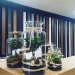 Forest in The Jar Las w słoiku (4)