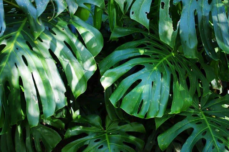 zielone sciany wroclaw