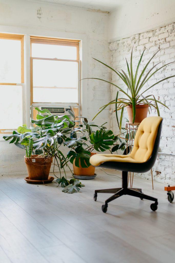 rośliny do biura warszawa